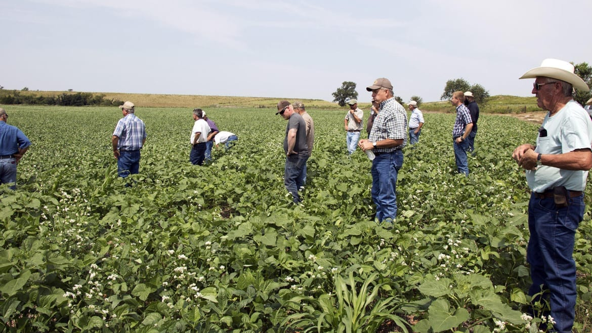 Several Oklahoma farmers wander through a field of broad-leafed cover crops during a state Conservation Commission workshop in Dewey County in western Oklahoma. (Photo: Logan Layden | Harvest Public Media)
