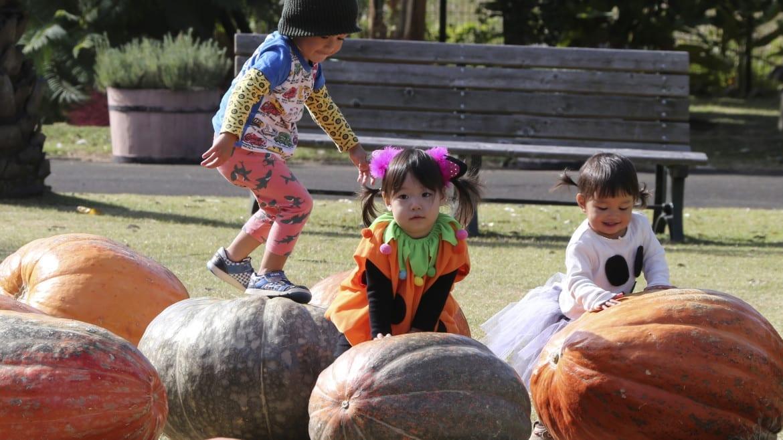 Children playing on pumpkins