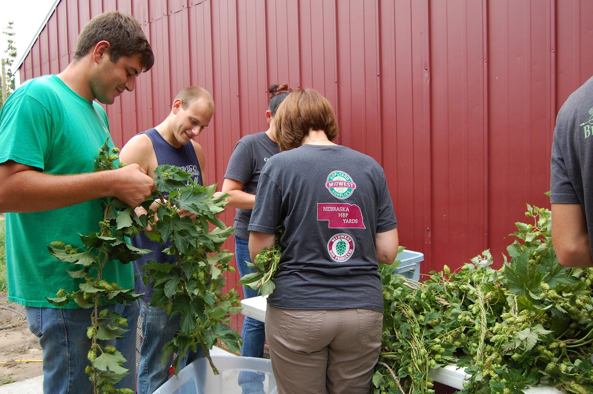 People picking hops.