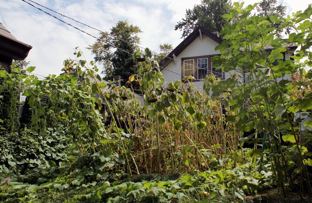 A man's backyard of plants.
