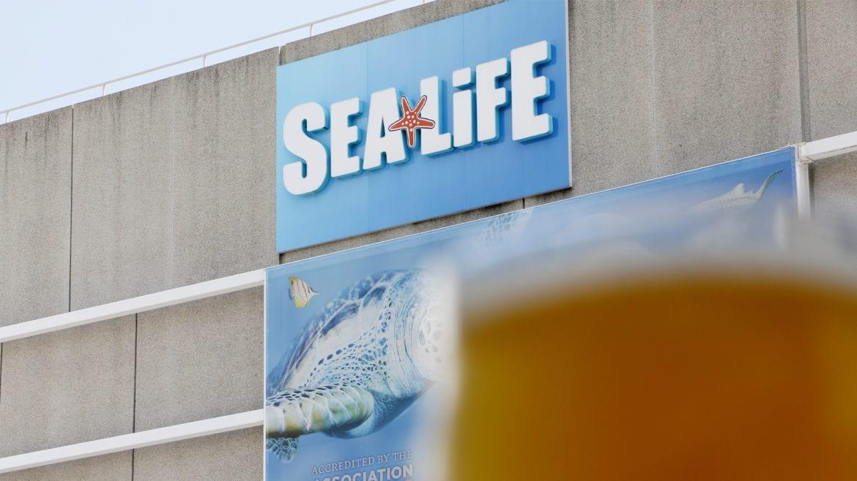 sea life sign