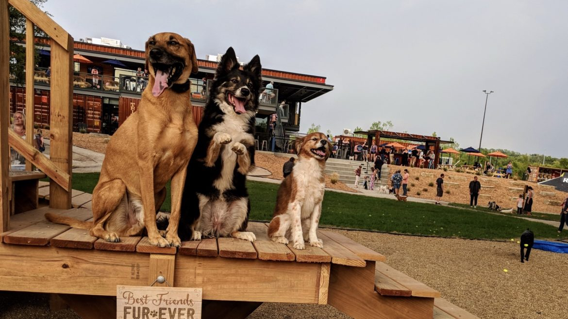 Three dogs sit on a deck at Bar K