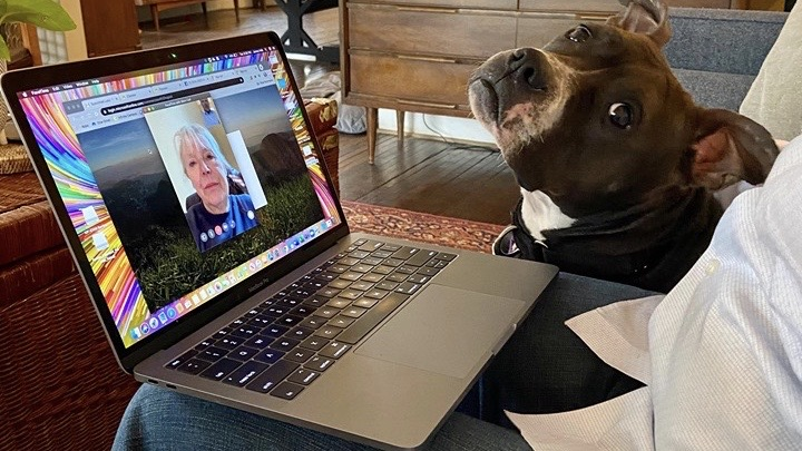 A foster dog meets a potential adopter via Facetime.
