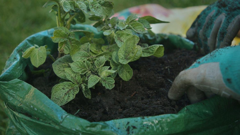 Gardening in bags
