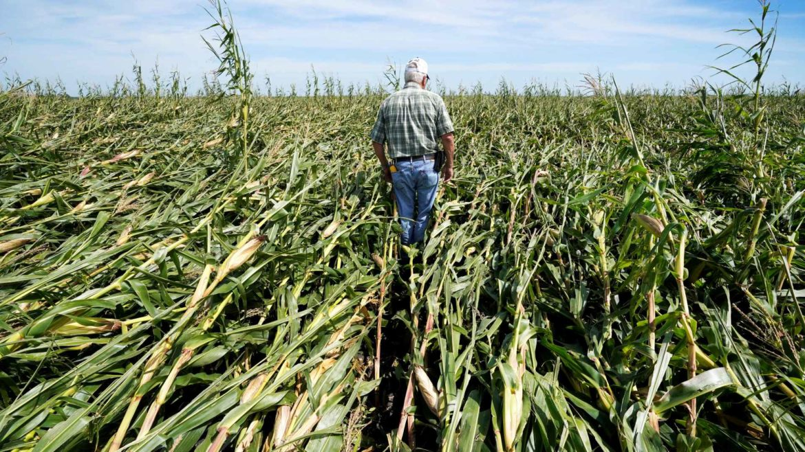 Derecho crop damage in Iowa