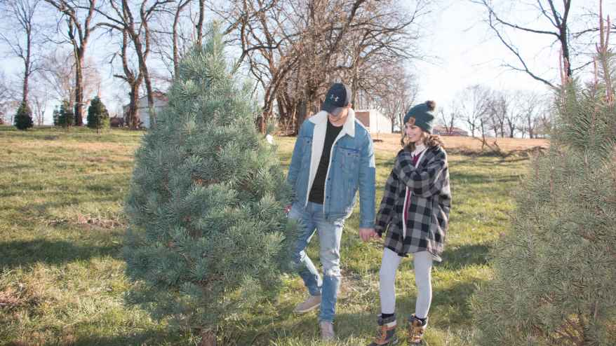 Leah and Nate Fry look for a 7-foot Christmas tree.