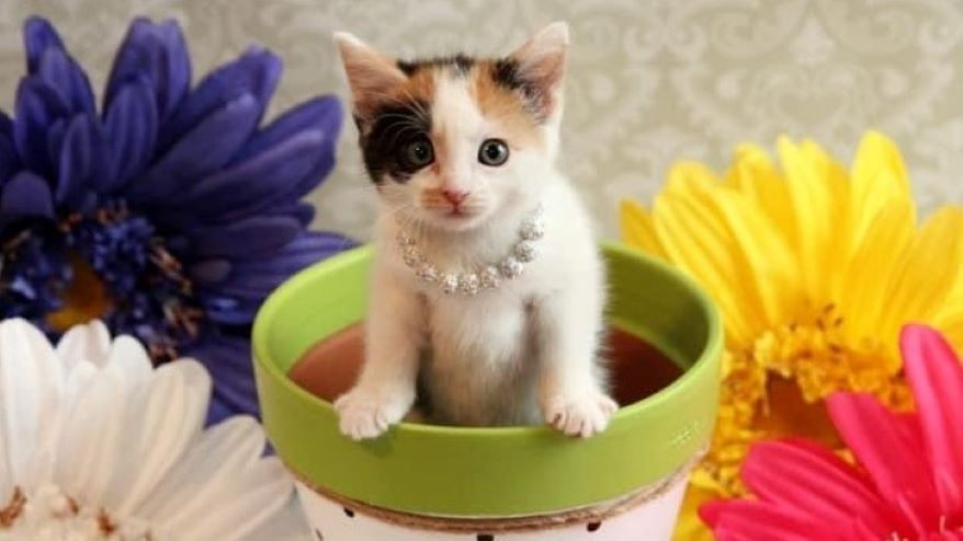 """The Great Plains SPCA animal shelter on Saturday is hosting a """"Kitten Shower"""" to collect supplies to help care for the spring influx of kittens."""