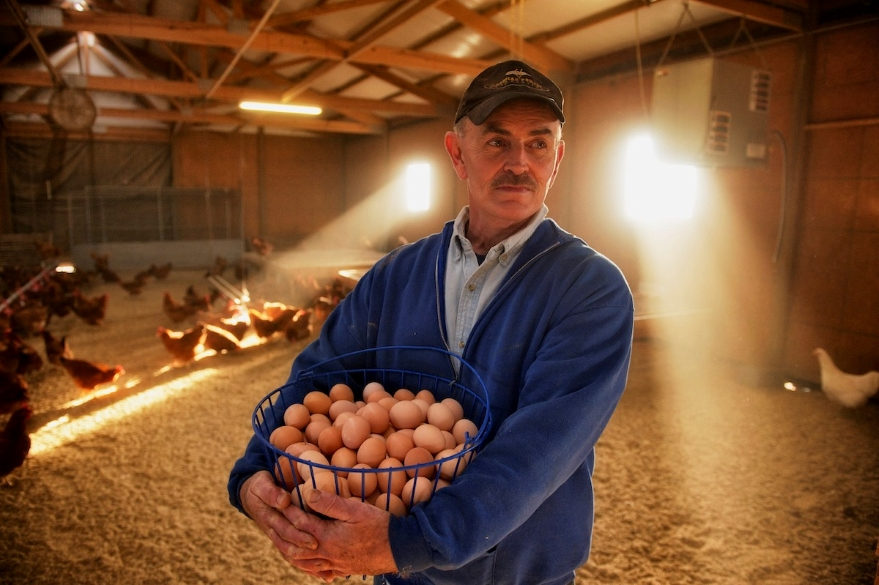 Frank Reese, 72, has spent a lifetime raising Standardbred chickens and turkeys. The poultry, an alternative to factory farmed hybrids, are considered the gold standard for genetic health and humane animal treatment.