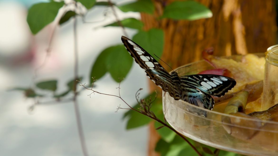 A butterfly at Powell Gardens.