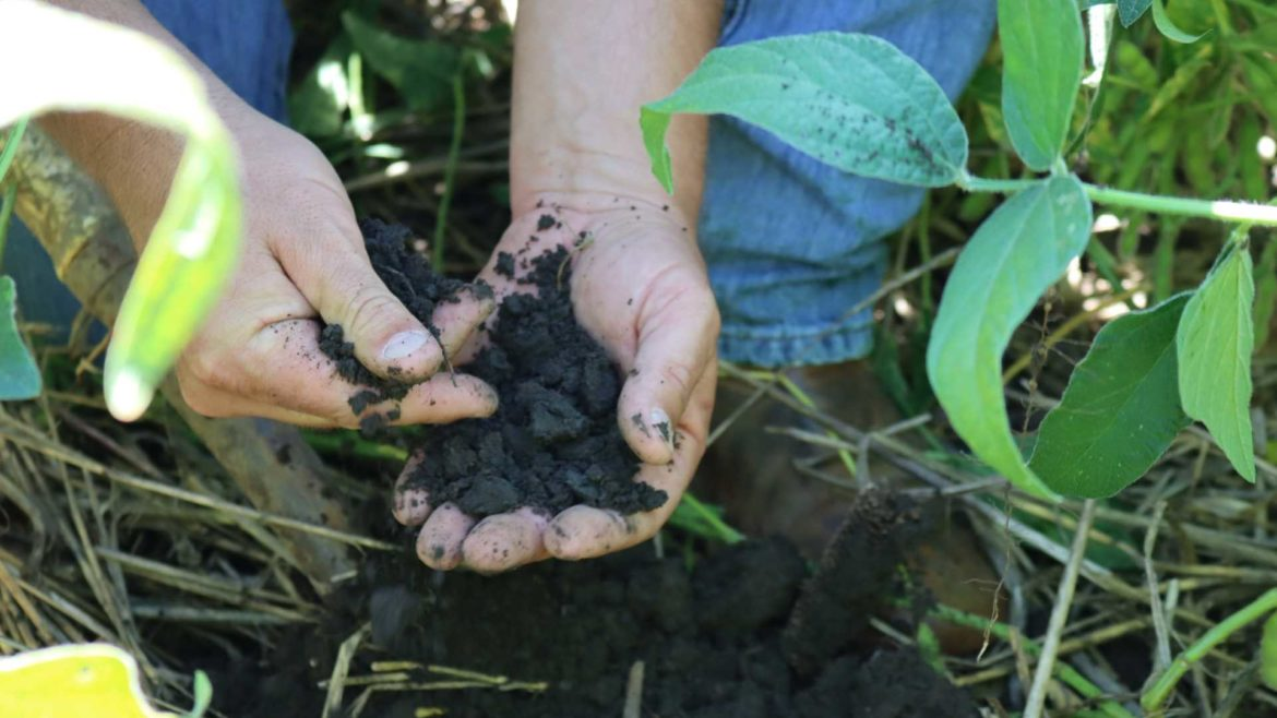 Nick Guetterman's soil is protected by the cover crop, leaving it moist and porous looking.
