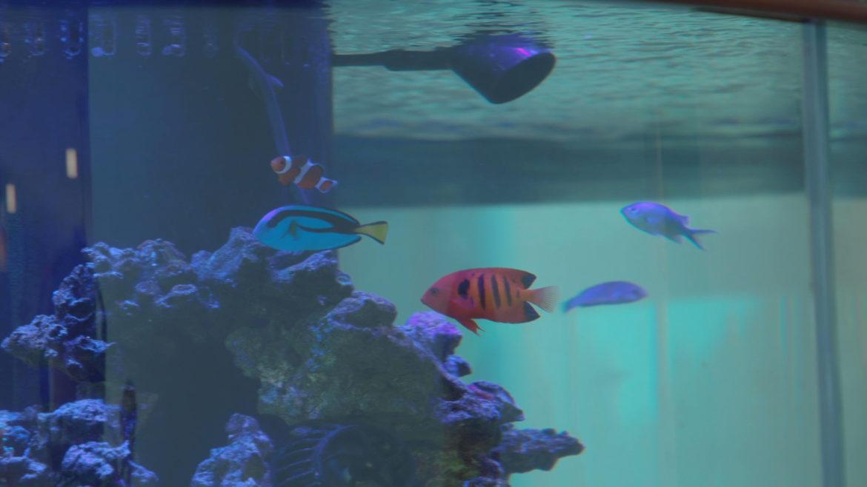 An aquarium at KD Academy.